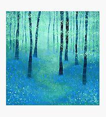Bluebells, Challock Photographic Print