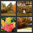 The Color Of Fall by Linda Miller Gesualdo