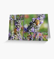 Bees on Lavendula angustifolia Greeting Card
