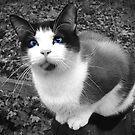 """Rocky, In Black & White"" by Melinda Stewart Page"