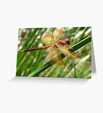 Dragonfly Wings Greeting Card