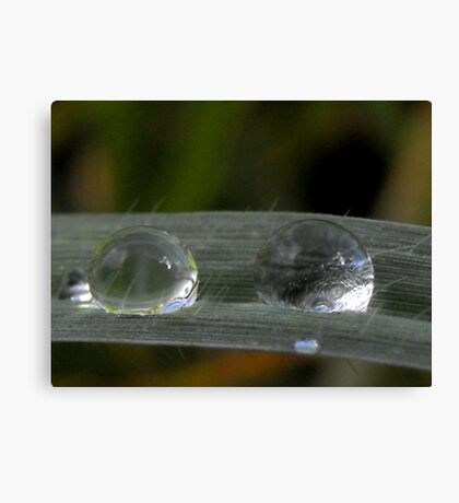 2 raindrops Canvas Print