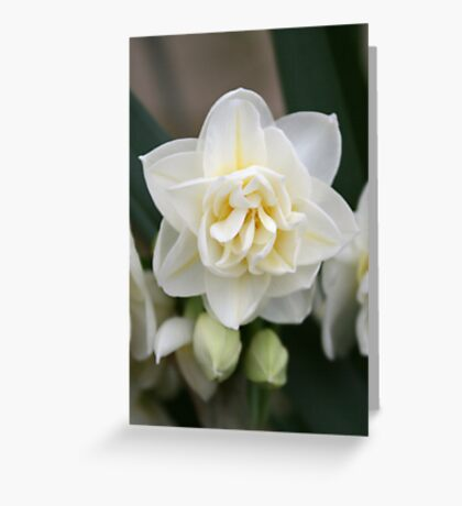 Spring Bloom Greeting Card