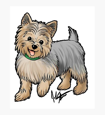 Yorkshire Terrier Photographic Print
