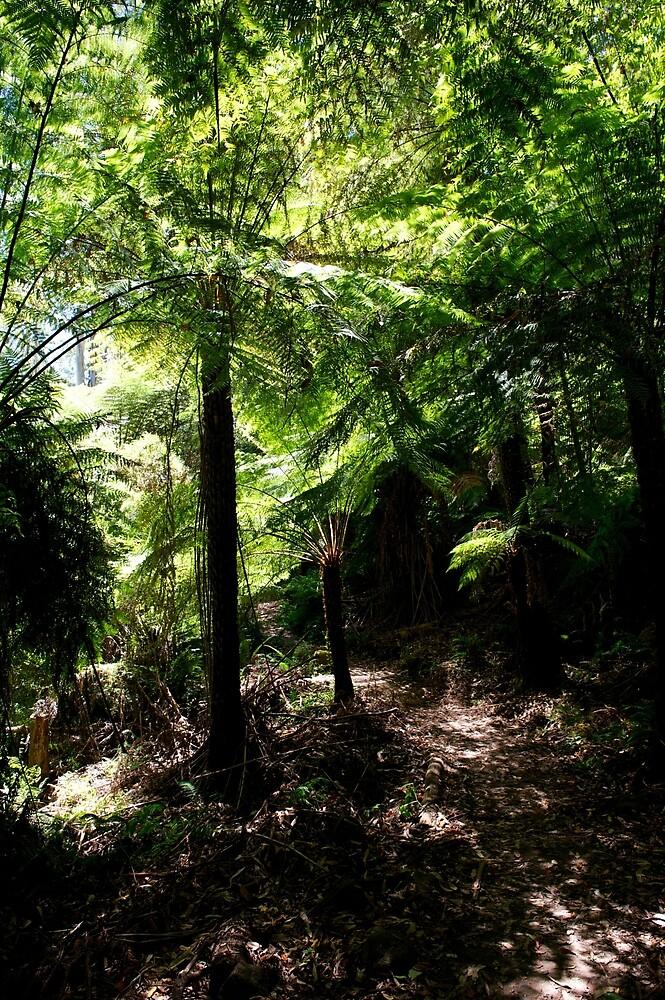 Tree Fern Canopy by GP1746
