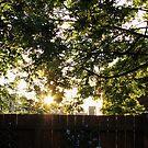 Sommer Sonnenaufgang von BlueMoonRose