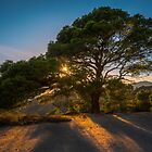 The Tree at Sunset by Ralph Goldsmith