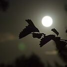 By the light of the full moon by vfphoto
