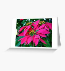 Poinsettia at the Zoo Greeting Card