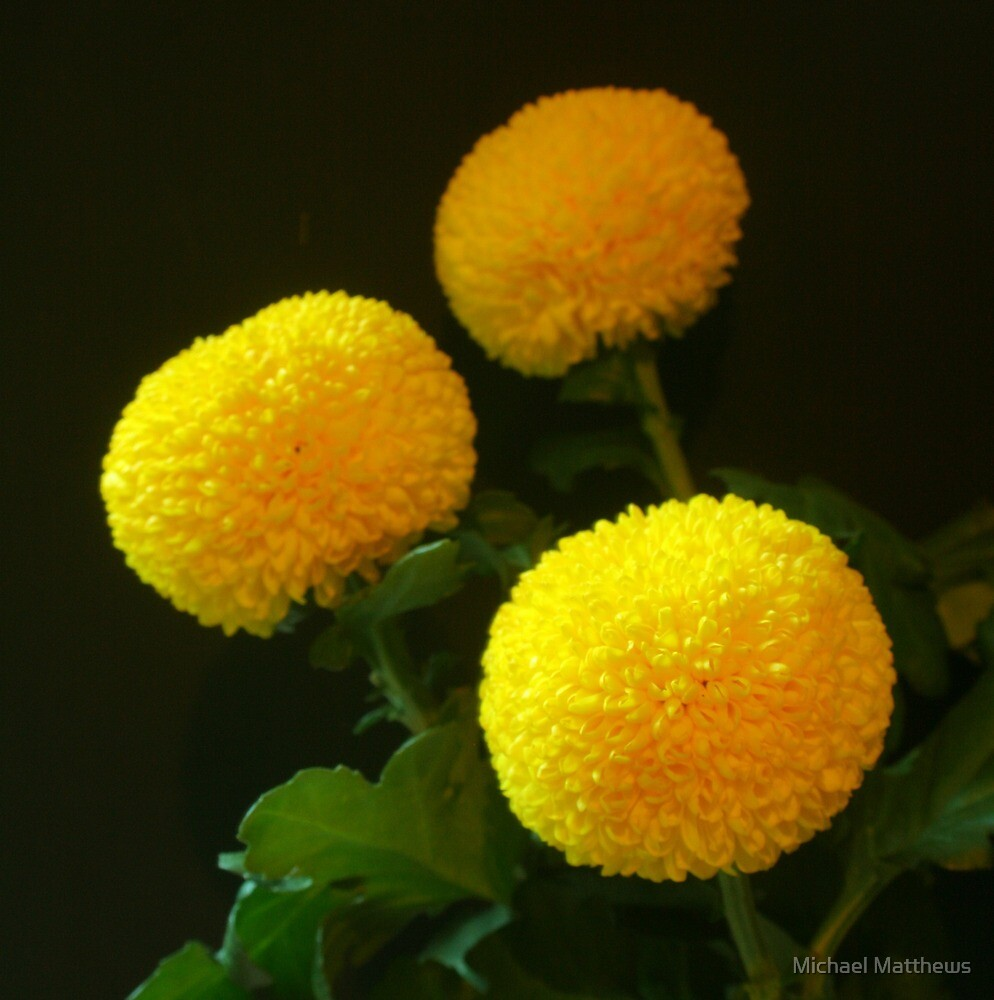 Yellow balls of nature by Michael Matthews