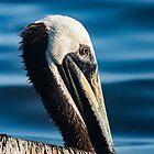 Grooming Pelican 2 by KensLensDesigns