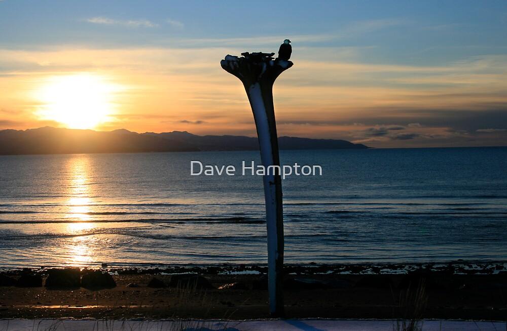 Eagle Stump by Dave Hampton