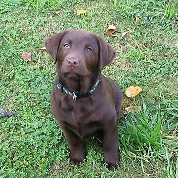 labrador retriever chocolate puppy by marasdaughter