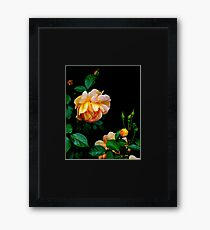 Heavy is the head of beauty- Apricot Rose Framed Print