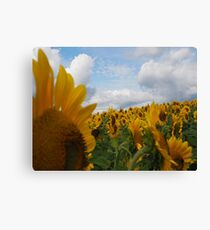 Sunflower Garden Canvas Print