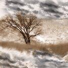Colorado Winter by CarolM