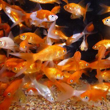 Feeder Fish by WildestArt