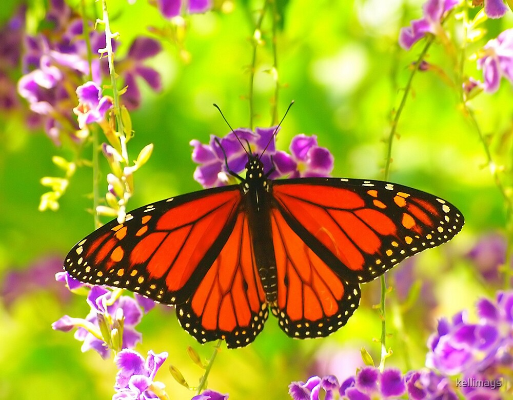 Butterfly hanging about by kellimays