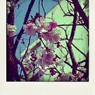 The Spring... by polaroids