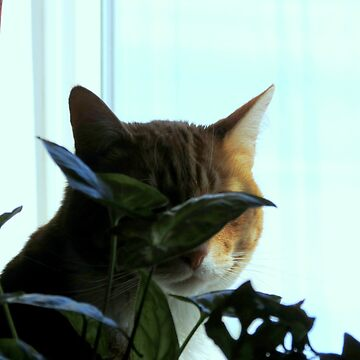 Hiding In Plain Sight by trueblvr