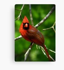 """Male  Northern Cardinal"" Canvas Print"