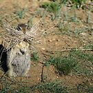 A Caring Ground Squirrel Mother by evmphotos