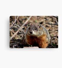 Groundhog II Canvas Print