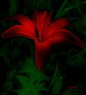 Dark Star by RC deWinter