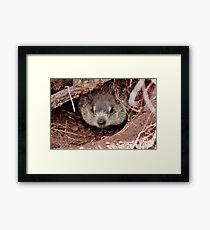 Groundhog III Framed Print