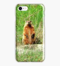 Groundhog iPhone Case/Skin