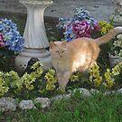 Punken In A Pretend Garden by Linda Miller Gesualdo