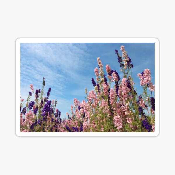 Blue and Pink Flower Confetti Fields Landscape Sticker