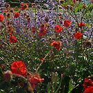 Flowering! by tonymm6491