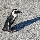 African Penguin by ten2eight