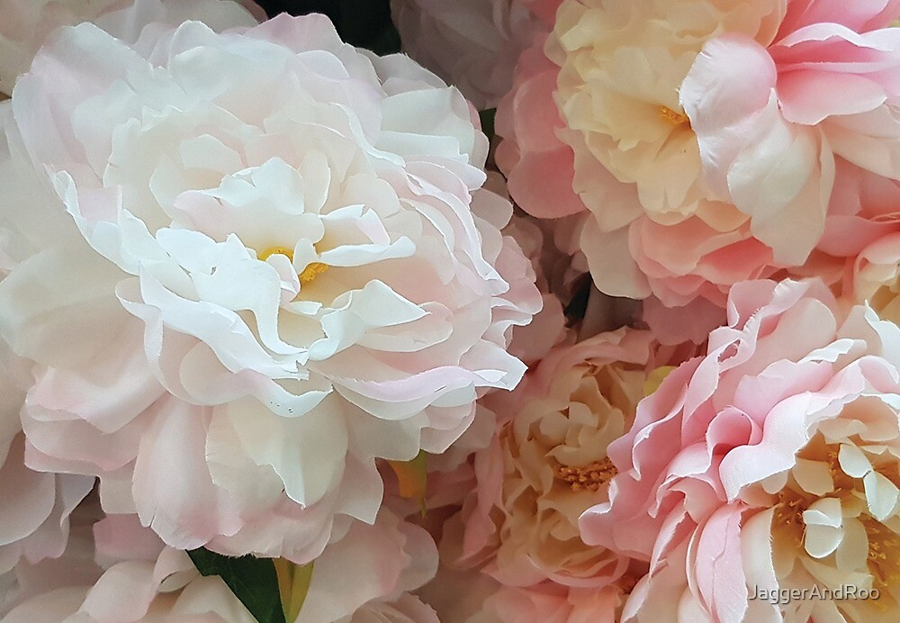 Pink & White Camelias by JaggerAndRoo