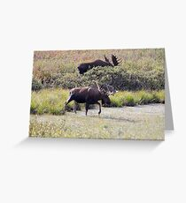 Two Bull Moose  - 11861 Greeting Card