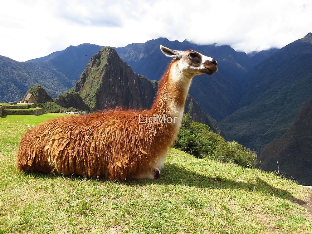 Majestic Lama | Peru by LiriMor