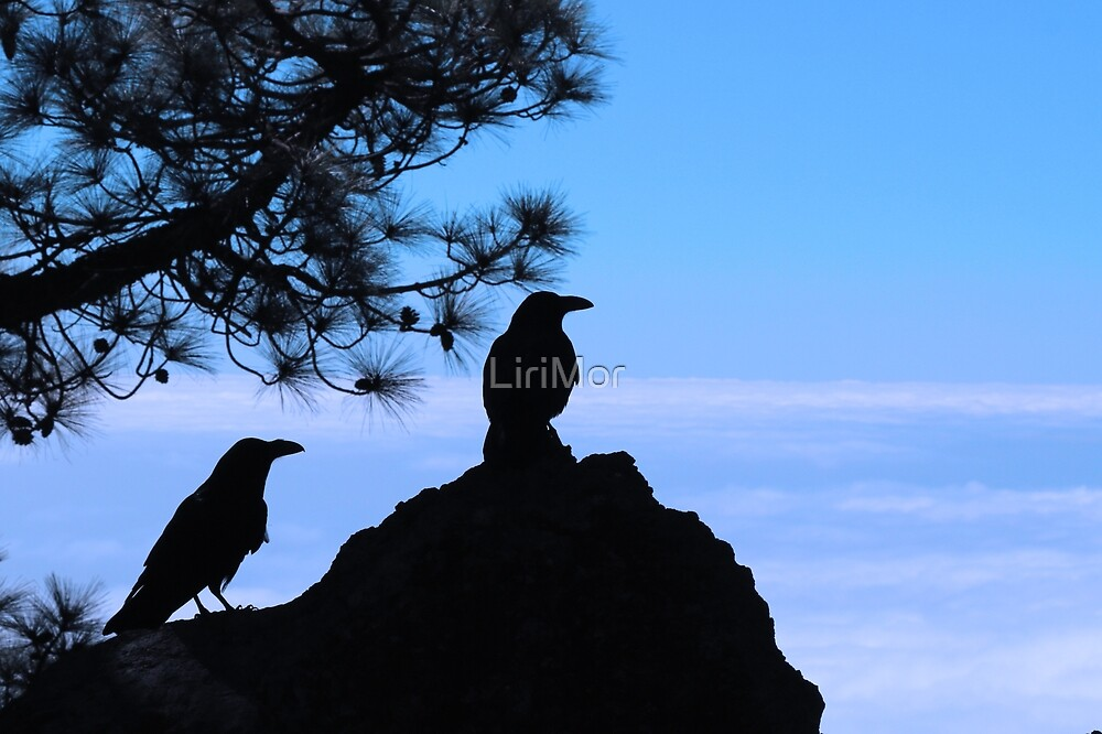 Crows | Canary Islands by LiriMor