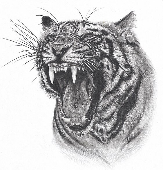 tiger by Iskanderox