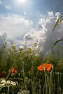 Summer Field by Nigel Bangert