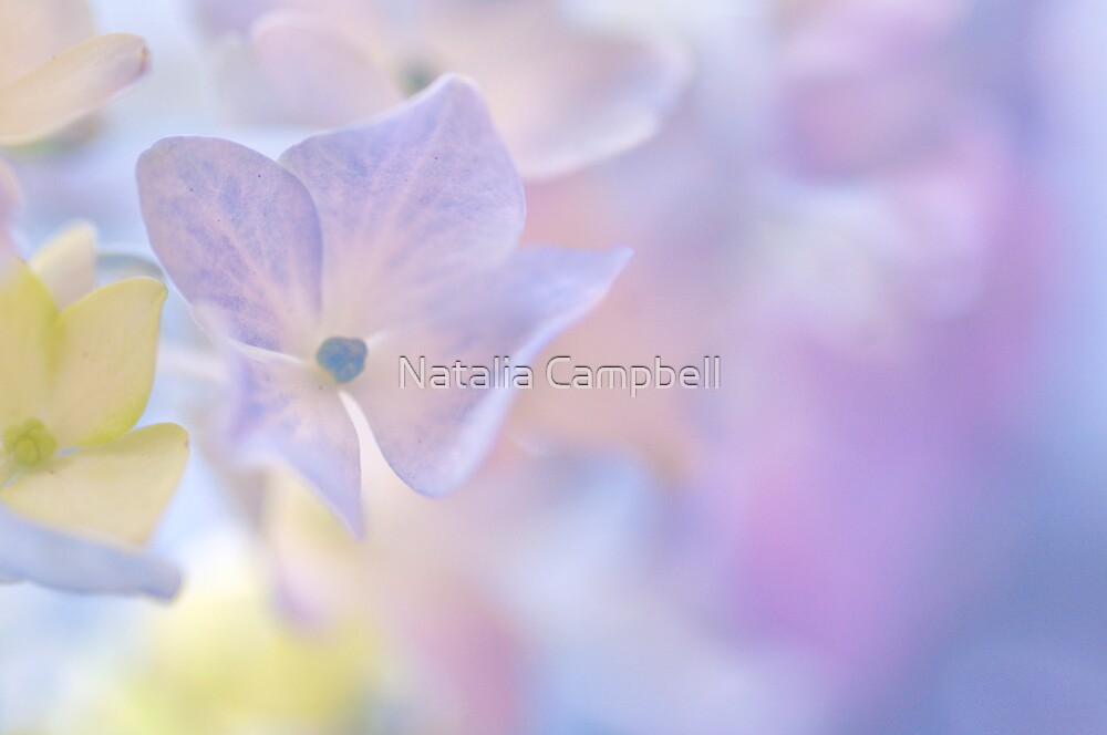 i've got a special treat for you... by Natalia Campbell