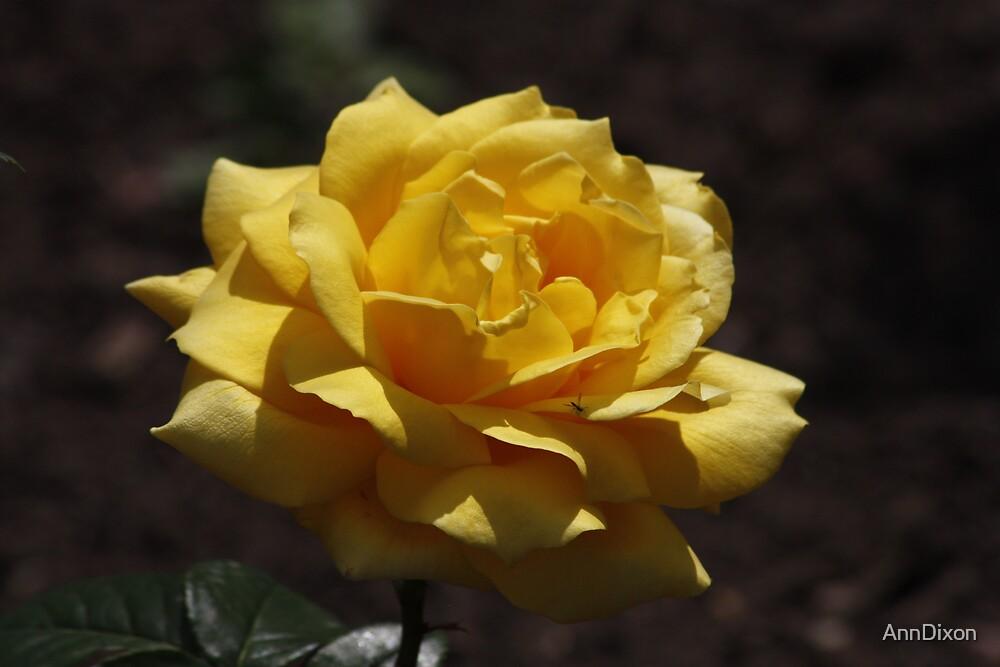 Yellow Rose by AnnDixon