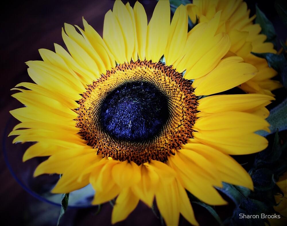 Sunflower by Sharon Brooks