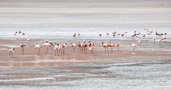 Pink Flamingos - Laguna Hedionda, Bolivian Altiplano by GypsySoulImages