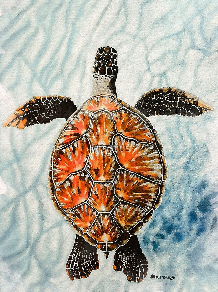Green Turtle by Marcius