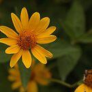 A Little Beauty by Lyle Hatch