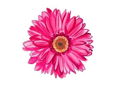 hot pink daisy by stickersnstuff