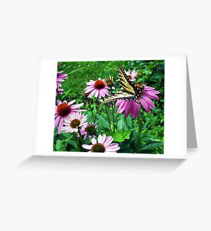 Beep-Beep bee behind Greeting Card