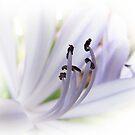 Lavender by Nikki Collier