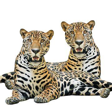 Twin Jaguars by stuartk
